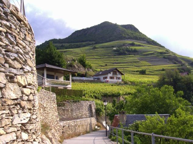 Plantation de vigne 2