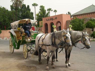 Marrakech en calèche 1