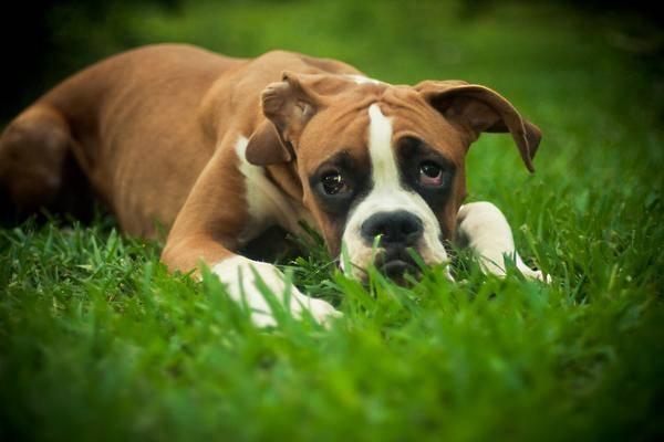 equipement-pour-capturer-un-chien-craintif