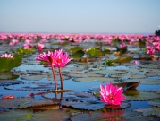 lac-de-lotus-rose-udon-thani-2