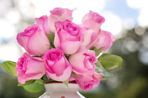 pink-roses-2191636_960_720