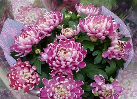 chrysanthemums-bouquet-74949__340
