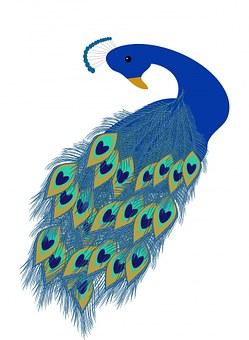 peacock-163652__340