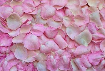 rose-petals-3194062__340