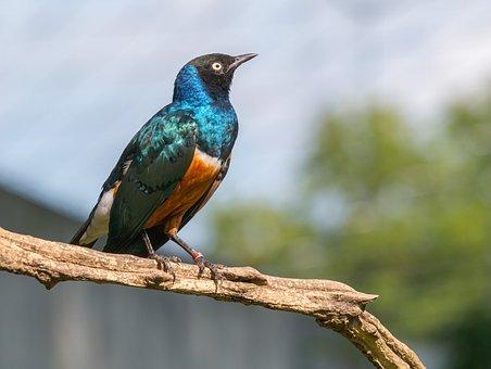 bird-3537242__340