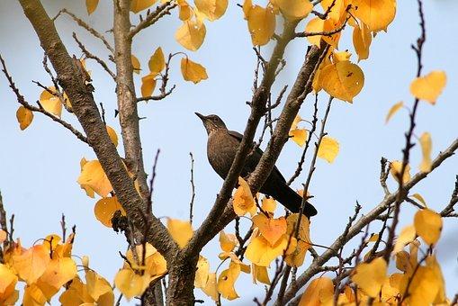 bird-4123273__340