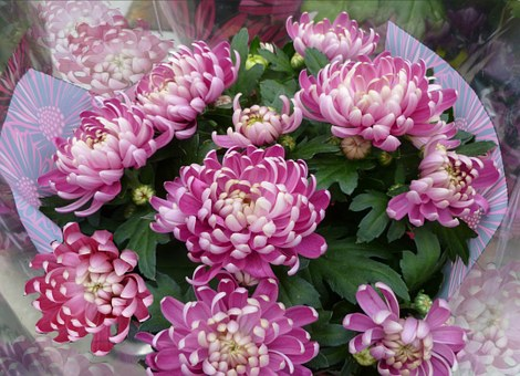 chrysanthemums-bouquet-74949__340